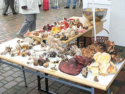 Bauernmarkt Hirschfeld 2005